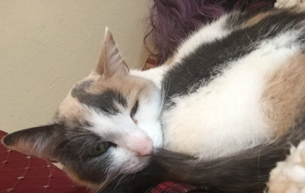 Curling up on Mommy's Arm